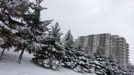 Pine Trees On Slant In Front Of Apartment Building