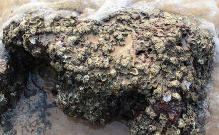 coquina stone bitten a wave on anjuna beach  goa Stock Photo - 23667836