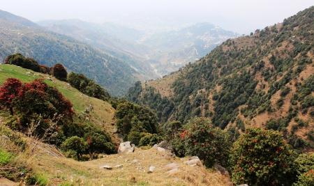 trecking: Trekking in Himalayas near McLeod Ganj  India