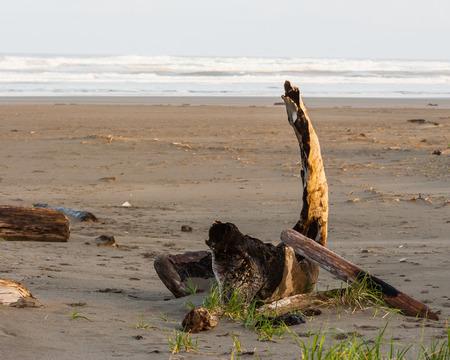 shorelines: Driftwood on the beach Stock Photo