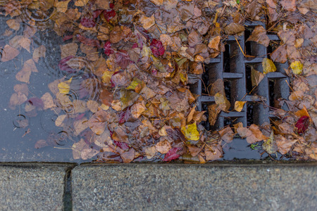 metal grid: Leaves clogging a drain