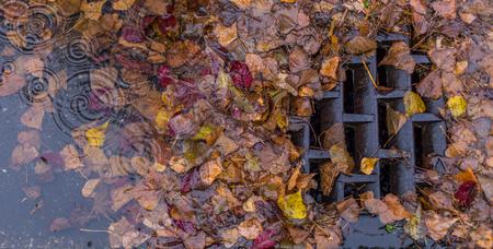metal grate: Leaves clogging a drain