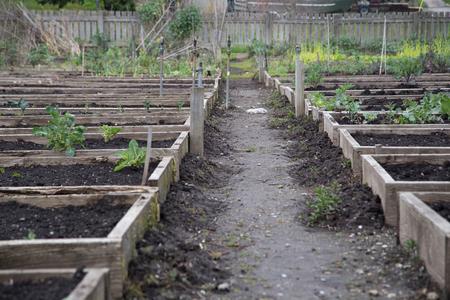 Pea Patch Garden Stok Fotoğraf