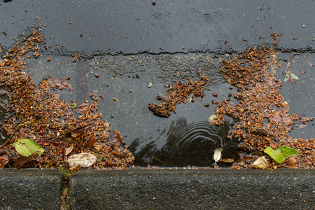 debris: Street drain clogged by falling leaves and debris Stock Photo