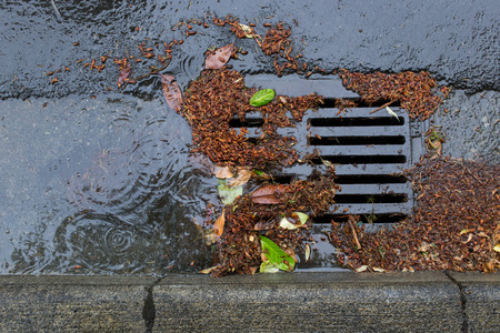 clogged: Street drain clogged by falling leaves and debris Stock Photo