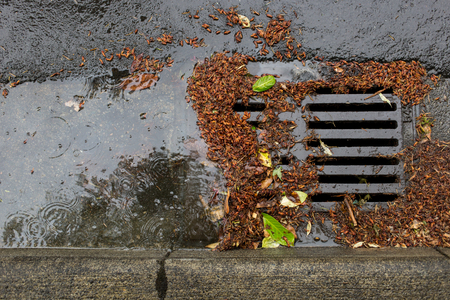 Street drain clogged by falling leaves and debris Archivio Fotografico