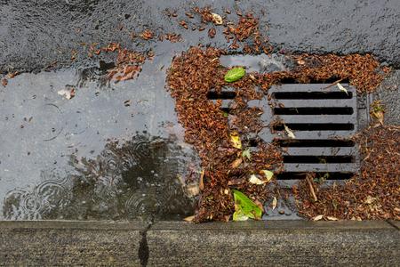 Street drain clogged by falling leaves and debris Standard-Bild