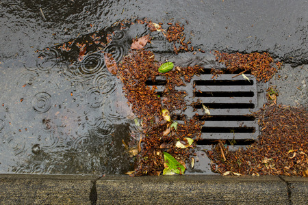 Street drain clogged by falling leaves and debris