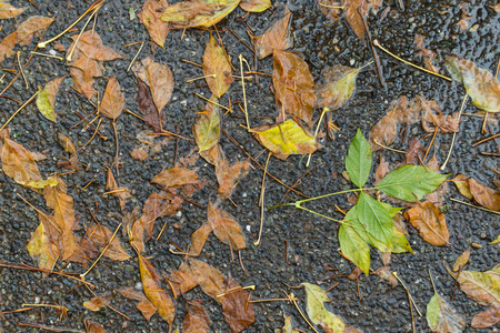 Brown leaves on the sidewalk after a rain storm Stock fotó