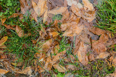 Fallen leaves in a puddle Stock fotó