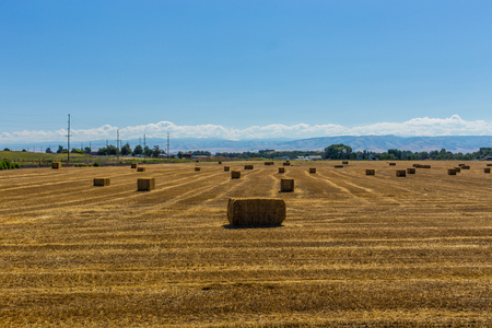 Bales of hay in the fields