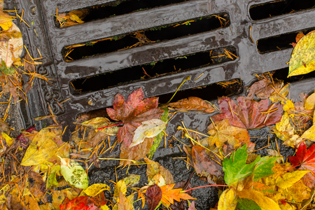 Multie colored leaves clogging a drain