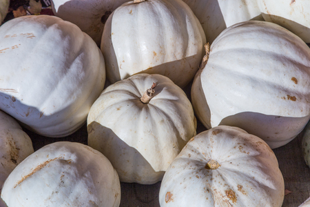 Harvested pile of albino pumpkins