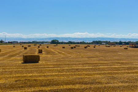 Harvested bales of hay in a field Stock fotó