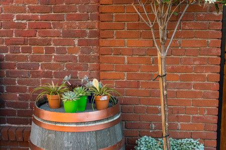 tree and flower pots in front of a brick wall Stock fotó