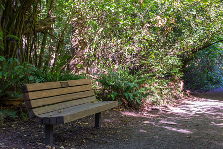 Park bench on a foot trail in the morning sun
