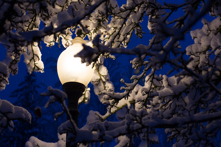 Street light seen through snow covered branches Stock fotó