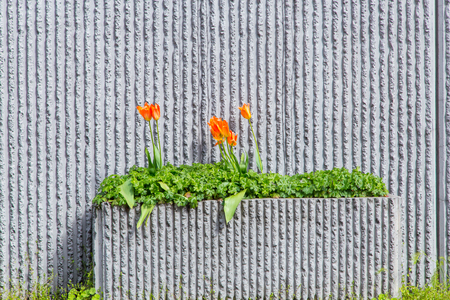 planter: Roadside cement planter