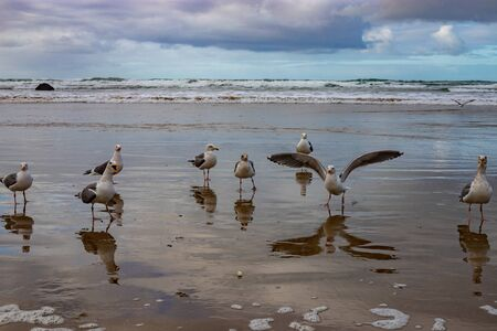 Seagulls frolicking on the beach