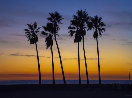 Palmiers contre beau coucher de soleil.