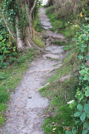 The pathway forward up the hill in the Pacific Northwest Stock Photo - 23468516