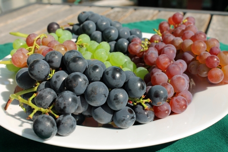 concord grape: Fresh ripe bunches of blue, purple and green grapes on a white plate on a patio table on a sunny day.