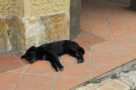 terra cotta: A black dog sleeps on red terra cotta tiles against a stone building in Cuenca, Ecuador Stock Photo