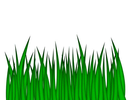 grass blades: Illustration of green grass isolated on a white background. Stock Photo
