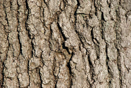 Weathered tree bark background cracked and textured