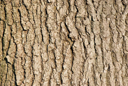 Tree bark background cracked and textured Reklamní fotografie