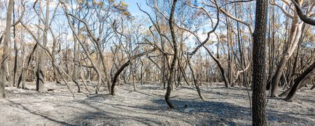 Scorched earth and blackened tree trunks caused by a large bush fire in the southern Sydney suburb of Barden Ridge.