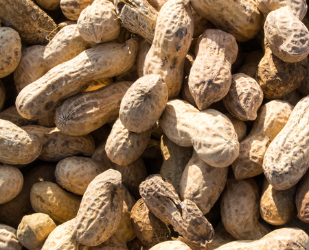 monkey nuts: Monkey nuts are a cheap form of the famous legume peanut Stock Photo