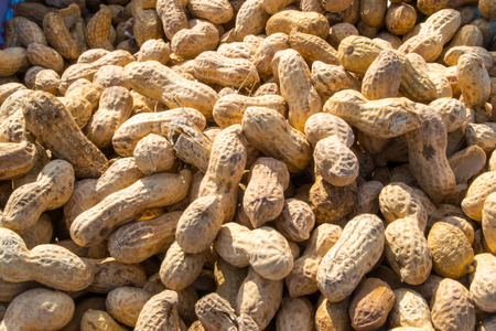 monkey nuts: Monkey nuts for sale - crack the fragile brittle shells to get to the peanut