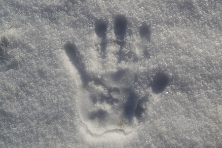 inprint: A solitary human hand print in fresh cold snow Stock Photo