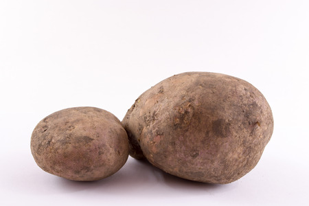 unwashed: Two potatoes with dirt and mud fresh from the garden on a white background. Unclean yet fresh organic spuds. Stock Photo