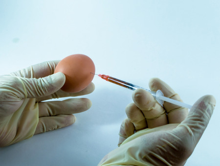 gloved: An unknown latex gloved medical stranger injects a fresh egg with an unknown poison or GMO chemical