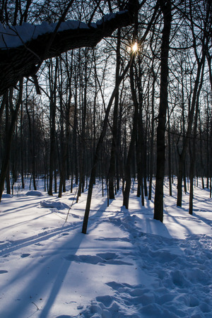 trampled: Trees reflect the winter sun on trampled winter snow Stock Photo