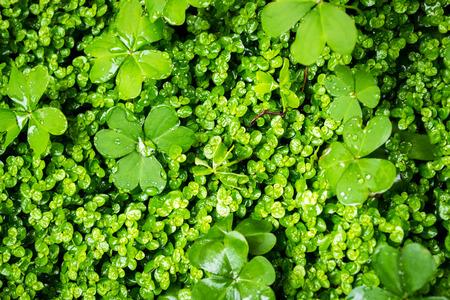 green vegetation: Closeup image of fresh lush green vegetation growth Stock Photo