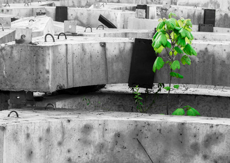 Fresh green tree grows out of grey concrete blocks photo