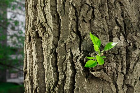 Bright green tree shoots on bark photo