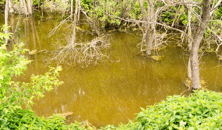 brackish water: Wild swamp water and murky green brown water