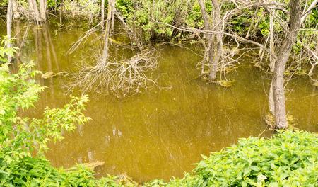 murky: Wild swamp water and murky green brown water