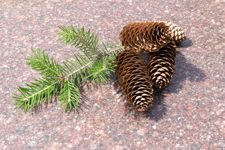 fir twig: Four pine cones resting on Marble with fir twig Stock Photo