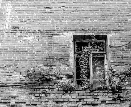 security barrier: Single derelict window covered in climbing Ivy with a strong metal security barrier Stock Photo