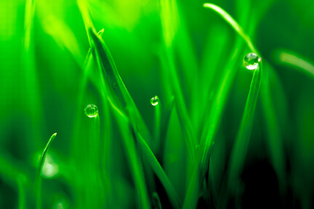 Macro closeup of fresh green with dew droplets of water