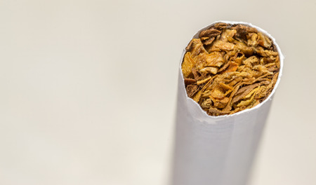 unlit: Macro closeup of an unlit cigarette end with tobacco strands on a white background Stock Photo