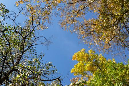 Des feuilles d'automne jaunes et verts brillants sur divers arbres contre un ciel bleu d'automne avec l'éclat du soleil