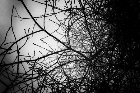 bewitched: Black and white image of tree branches set against a grey sky. There are no leaves on the twigs in this nature abstract image. Stock Photo
