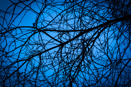 bewitched: Blue midnight toned night image of tree branches set against an aqua colored sky. There are no leaves on the twigs in this nature abstract image.