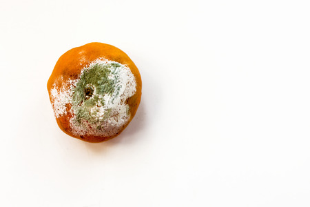decompose: Horizontal image of a mouldy rotting orange coloured tangerine citrus fruit. White background with copy space area for food and hygiene based designs and concepts. Stock Photo